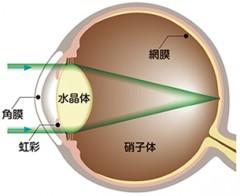 正常な眼球水晶体が透明で光をよく通します。
