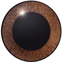 正常な眼球 水晶体が透明で光をよく通します。